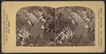 View in Prospect Park, from Robert N. Dennis collection of stereoscopic views 8.png