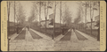 View of a paved walk with cadets lined up along border of trees, by Trowbridge & Jennings.png