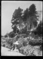 View of the Dunedin Botanic Garden after a snowfall. ATLIB 294714.png