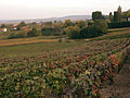 Vignes (Chigny les Roses.51) Cl.J.Weber03 (23050621343).jpg