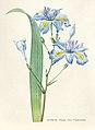 Vintage Flower illustration by Pierre-Joseph Redouté, digitally enhanced by rawpixel 26.jpg