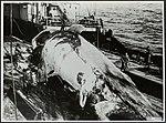 Visserij, walvisvangst, Bestanddeelnr 126-1339.jpg