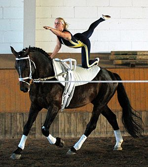 Equestrian vaulting - Compulsory Flag