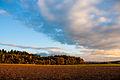 Wald in Hessen-Lahntal-02709.jpg