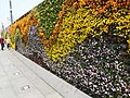 Wall of Flowers- the Bund - panoramio.jpg