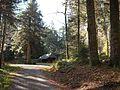 Wandern im November in Todtmoos - panoramio (2).jpg