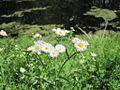 Wapanocca National Wildlife Refuge Crittenden County AR 028.jpg
