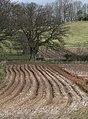 Wavy furrows - geograph.org.uk - 1196064.jpg