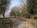 West Devon Way near Alston - geograph.org.uk - 384771.jpg
