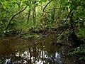 Wet woodland by the Pentewan Valley Trail - geograph.org.uk - 1389797.jpg