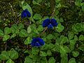 Whf blue 03.jpg