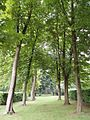 Whipsnade Tree Cathedral, South Transcept.jpg