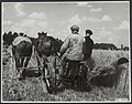 Wieringermeer, landbouw, Bestanddeelnr 124-0787.jpg
