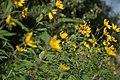 Wild flowers in a forest near Olgino 2020-09-13-3.jpg