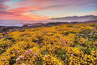 King Range (California) - Wildflowers, King Range National Conservation Area