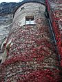 Windows with red leaves climbing cliff tower in Dordogne France.jpg