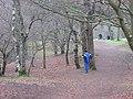 Woodland, Knock of Crieff - geograph.org.uk - 868081.jpg