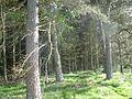 Woodland, Pearsie - geograph.org.uk - 442277.jpg