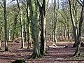Woodland near Conlig - geograph.org.uk - 754860.jpg