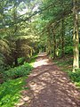 Woodland path - geograph.org.uk - 1431842.jpg