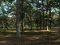 Woods at Horseshoe Bend NMP.jpg