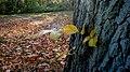 Yellow On Tree Trunk 7 (181343303).jpeg