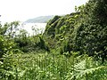 Young bracken in a cliff side gully - geograph.org.uk - 1345761.jpg