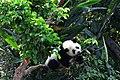 Yuan Zai Taipei Zoo.jpg