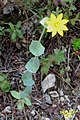 Zakynthos flora (35767795611).jpg