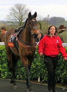 Zarkandar Irish-bred Thoroughbred racehorse