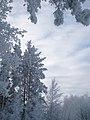 Ziema2.jpg