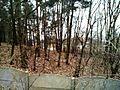 Zlotniki, pond, Pawlowicka street, dzialki.jpg