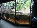 Zoo Hodonín, podmořský svět (3).jpg