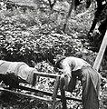 """Ferbar"" Alojz Hofbauer, Vitanje, ožema loden na rantah 1963.jpg"