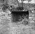 """""""Kazon"""" v vinogradu, Slavče 1953.jpg"""