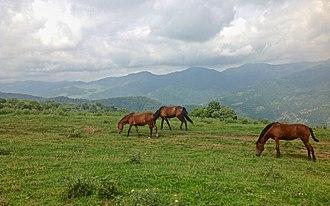 Göygöl National Park - Horses in Göygöl National Park