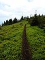 Čučoriedkový chodník - panoramio.jpg