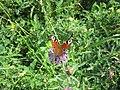 Бабочки 4.jpg