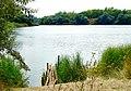 """Балахівське озеро """"Блакитне око"""" (літо).jpg"""
