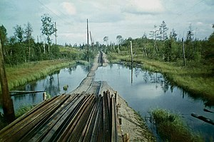 Swamp - Mass deforestation causes the appearance of swamps. Belorucheiskaya (Russia) forestry railway in 1977.