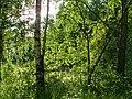 Блики на листве - panoramio.jpg