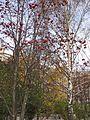 Во дворе д.17 - panoramio.jpg