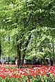 Елагин парк, фестиваль тюльпанов87878.jpg