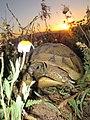 Желка и растенија - с. Мажучиште (2).JPG