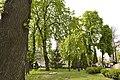 Зелені насадження у Золотоворотському сквері, Київ.jpg