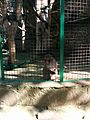 Зоологічний парк в травні 2016.jpg