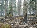 Канельярви- Заходское , низовой пожар 2006 - panoramio - Dmitriy Alekseenkoff (2).jpg