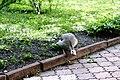 Київський зоопарк Гуска атакує 04.JPG