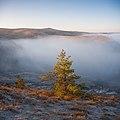 Крейдова флора, ранок з туманом.jpg