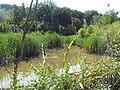 Лесное озеро - panoramio (16).jpg